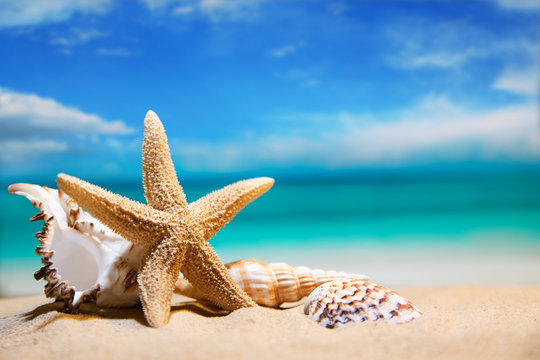 seashells by the sea. beach holiday. beautiful summer background
