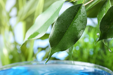 Beautiful green leaf with water drop on blurred background, closeup. Space for text