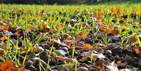 Laub Herbst Blätter