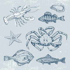 Hand drawn set of pictures with marine life. Vector illustration, sketch, graphic, contour illustration with fish in retro style