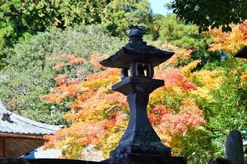 三島公園の紅葉