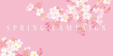 桜 スプリングキャンペーン イラスト