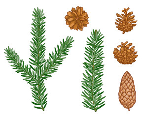 vector Winter evergreen pine tree set. Forest pine needles, pine cone. Natural design elements. Cute plant. Wild handdrawn christmas collection isolated on white background