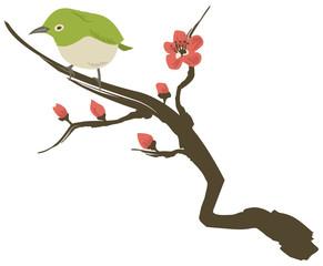 メジロと梅の花 イメージイラスト