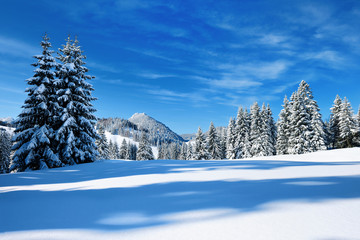Winter in Bavaria, fir trees and mountains covered by snow, bright sunshine, blue sky