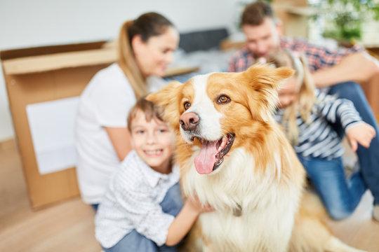 Hund als Haustier und Freund beim Einzug