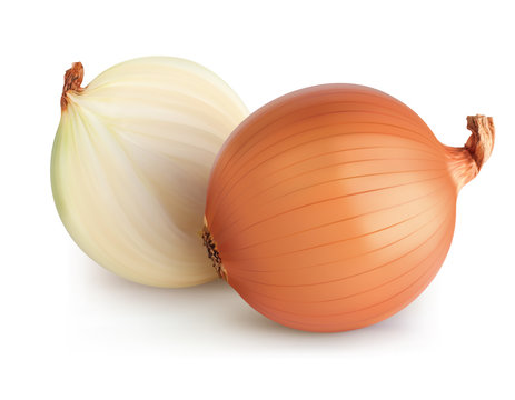 Onions isolated. Realistic vector 3d illustration