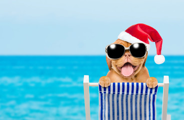 Happy puppy with red christmas hat and sunglasses in a deck chair. Empty space for text