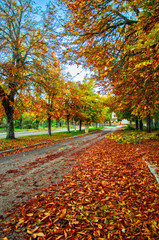 Beautiful romantic alley in a park with colorful trees and sunlight. autumn natural background