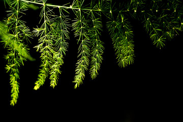 Green fern leaves with darkness background