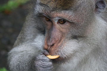 cute ape monkey primate with cookie snack