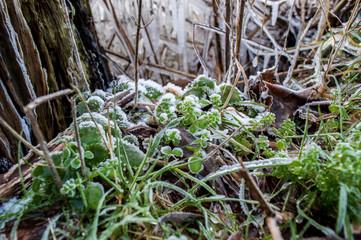 Frostige Blätter im Winter