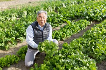 野菜を収穫するシニア