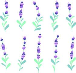 Lavender beautifull set on white background background vector illutration