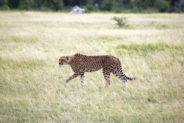 Botswana Tiere Natur
