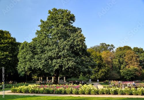 Baum Im Großer Garten Dresden Sachsen Deutschland Europa Stock