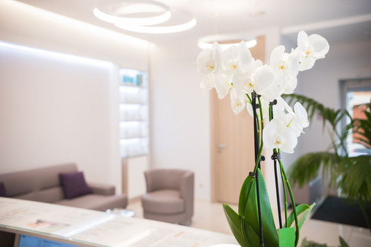 Interior of cosmetology clinic. Beige colors. White flowers on the desk. Reception