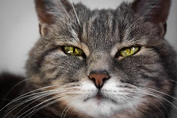 KatzeGrau