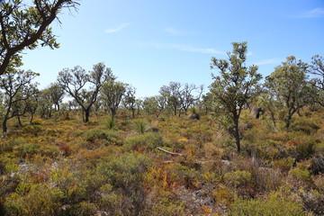Einsame Landschaft in Australien