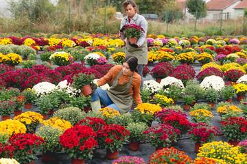 Florist working in flower field