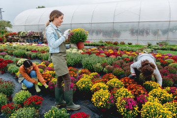 Florist working in greenhouse