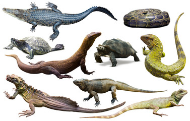 Wall Mural - collection of reptiles