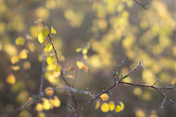 Goldenes Herbstlaubgeäst