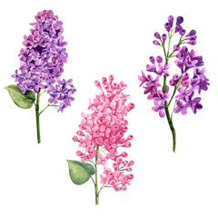watercolor violet and pink lilac set branch