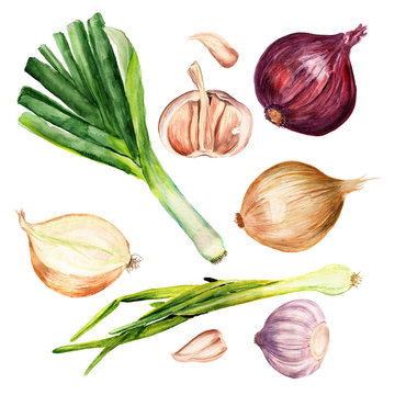 Set of onions and garlic