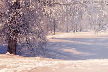 Beautiful winter scene, trees, frozen lake, snow covered branches on winter sunny day.