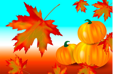 Bright orange pumpkins and falling red maple leaves on a blue autumn background. Seasonal banner or holiday card. Vector illustration