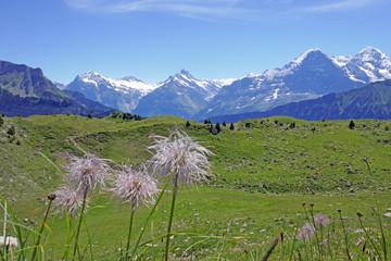 schynige platte, berner alpen, schweiz