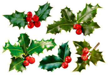 HOLLY AND BERRIES CUT OUT