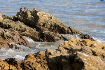 Famille mouette en bord de mer