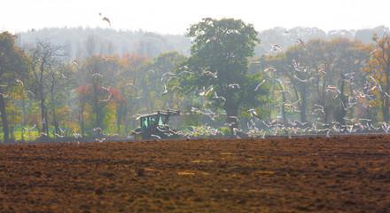 Semer un champ en Bretagne