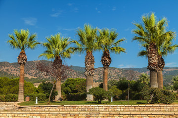 Beautiful palm trees on the background of high mountains and blue sky