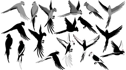 Vector jungle parrot set isolated