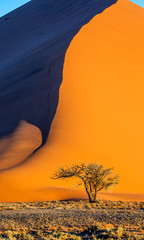 Spoed Fotobehang Oranje eclat Single tree on the background of a beautiful dune. Black and white photography. Africa. Landscapes of Namibia. Sossusvlei. Namib-Naukluft National Park.