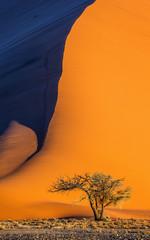 Enkele boom op de achtergrond van een prachtig duin. Zwart-wit fotografie. Afrika. Landschappen van Namibië. Sossusvlei. Namib-Naukluft Nationaal Park.
