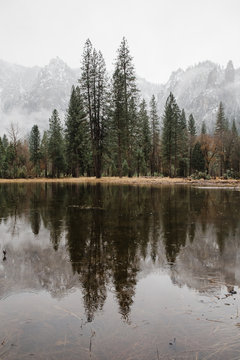 forest reflections on calm river in Yosemite National Park