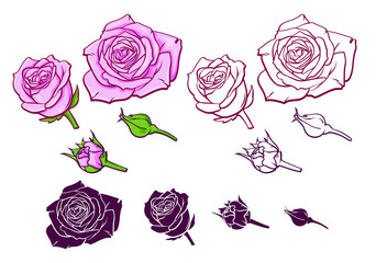 Set of pink roses in different design, line art vector illustration, realistic sketch of flowers