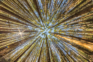 looking up in a forrest on a background of blue sky