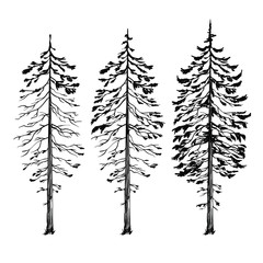 Silhouette of tree, vector illustration isolated on white background, line art illustration, black and white version