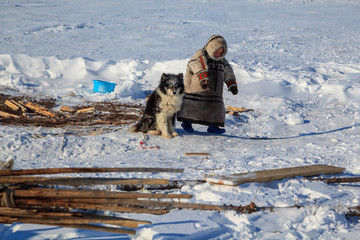 tundra, open area, the boy with a dog in cold winter weather, the boy  in national clothes,