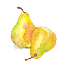 Two yellow pears watercolor on an isolated background