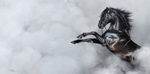 Photo sur cadre textile Chevaux Black Spanish horse rearing in smoke.