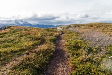 Wanderpfad in norwegischer Graslandschaft