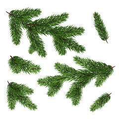 Set of fir branches. Green Christmas tree branches isolated without shadow.