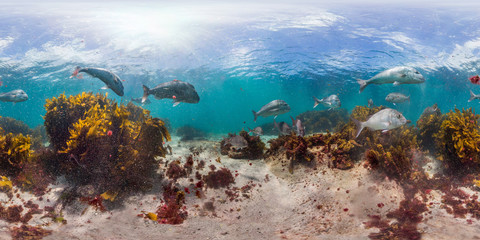 360 of kelp and fish in New Zealand