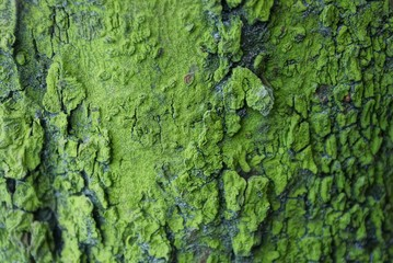 natural green texture of dry bark on a tree Fototapete